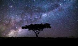 Acacia: un albero, ritratto da veri Maestri del time-lapse