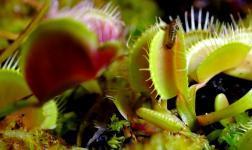 """Esce """"Carnivora"""", il mini time-lapse film sulle piante carnivore"""