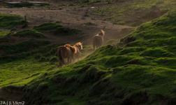 Meta 3.1/km2 – Il film sull'Islanda, in timelapse
