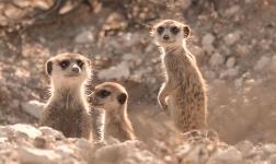 African Skies 2, il film che sostiene la fauna africana