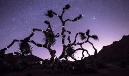 Luci creative su alberi morti che parlano