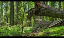 Passare attraverso gli alberi della foresta rossa