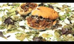 Stomachevole decomposizione di un kebab