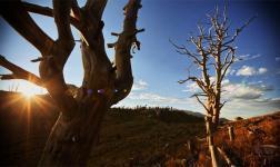 L'ultimo capitolo della trilogia Landscapes di Dustin Farrel