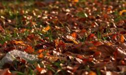 """Viaggio nel """"caldo"""" autunno del Cilento"""